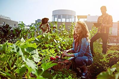 Workforce Wellness Vegetable Garden